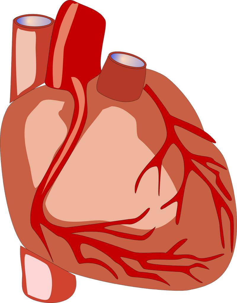 heart-1_resize